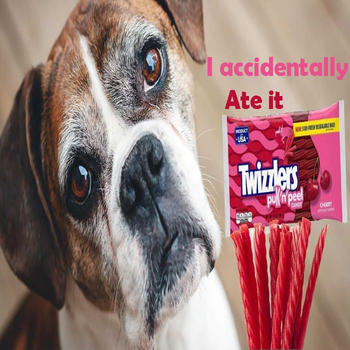 My dog accidentally ate my bag of Twizzlers