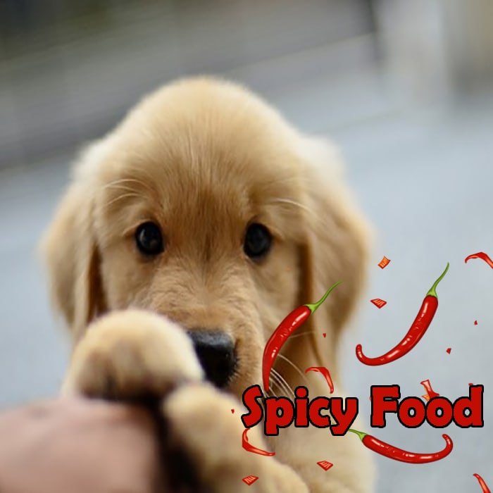 Can My Dog Eat Spicy Food