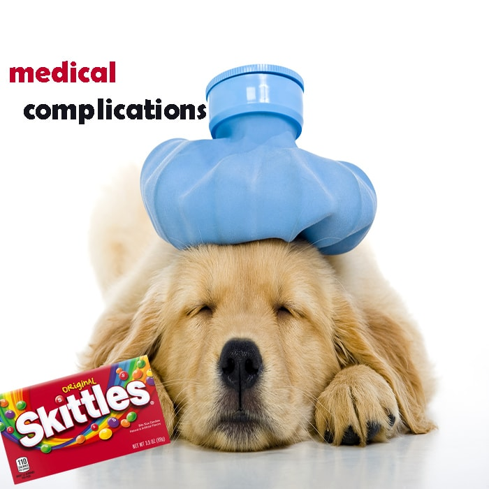 What Happens If You Feed Your Dog A Bag Of Skittles