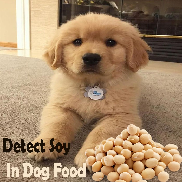 Detect Soy In Dog Food