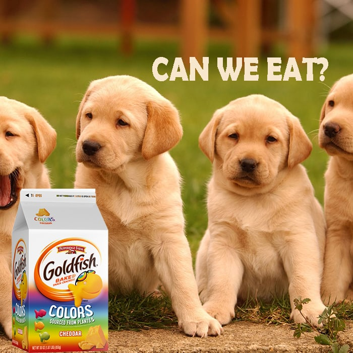 can dogs eat Goldfish Crackers