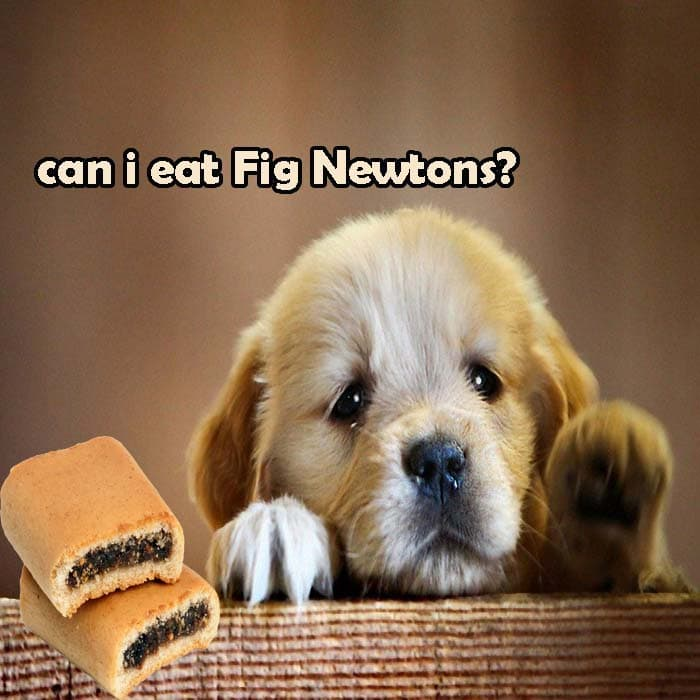 Can My Dog Eat Fig Newtons