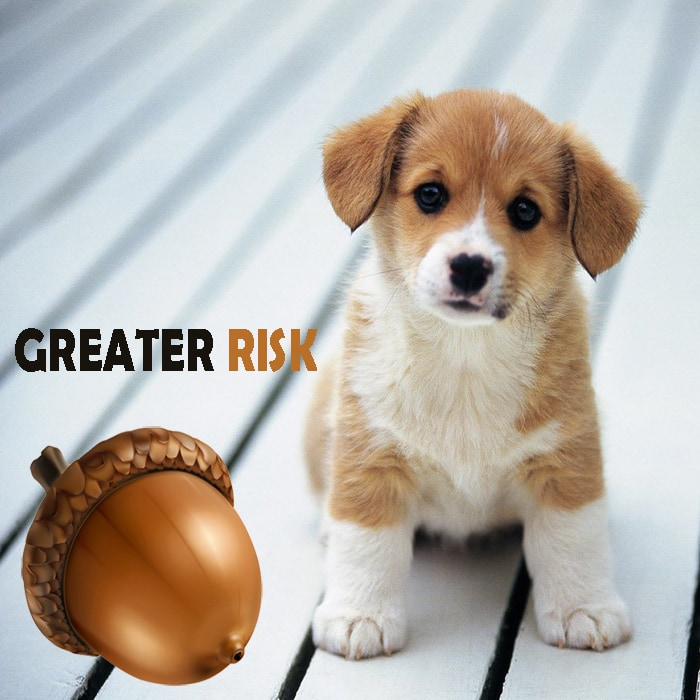 SMALL DOGS ARE AT A GREATER RISK